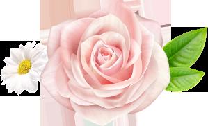 hương hoa hồng